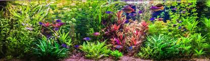 Aquascape Freshwater Aquarium Aquarium Decoration And Aquascaping