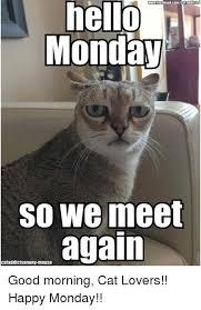 Good Morning Cat Meme - 25 best memes about good morning cat good morning cat memes