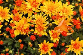 fall garden flowers gardening ideas