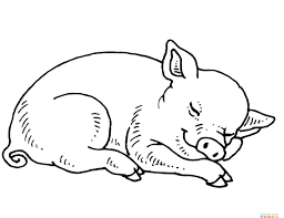 pig line art free download clip on printable coloring pages