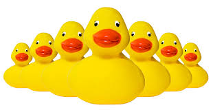 rubber duckies web savvy marketing