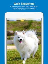 Tractive Dog Walk on the App Store
