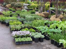 plant delivery garden center meyer landscaping