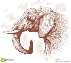 drawing of elephant stock photography image 14913232