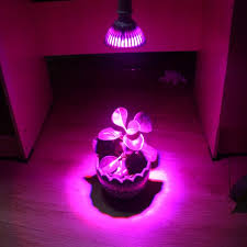 led lights for indoor plants led grow light lights up red flowers succulents greenhouse effect