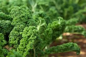 is kale a perennial hunker