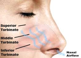 Nose Anatomy And Physiology Nasal Turbinates Nose Pinterest