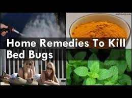 Medicine For Bed Bugs Home Remedies To Kill Bed Bugs Youtube