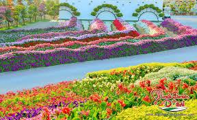 dubai miracle garden beautiful lands