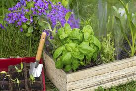 Types Of Vegetable Gardening by Welcome To Veggie Gardener Online And Home Grown