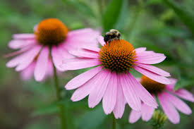 native washington plants gardens u0026 landscapes george washington u0027s mount vernon