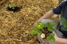 starting a new garden the no dig way using in garden composting