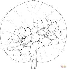 two water lilies coloring page free printable coloring pages