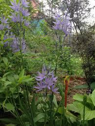 ontario native plants pollinators paradise project 2017