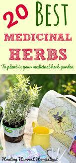 best 20 herb planters ideas on pinterest growing herbs 1025 best herbal natural healing health images on pinterest 72