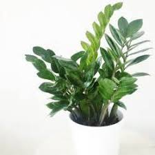 5 common houseplants and flowers that are most toxic to what