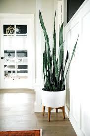 indoor plants design pictures best plant decor ideas on low light
