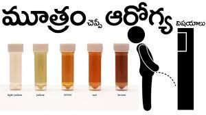 మ త ర చ ప ప ఆర గ య న జ ల your urine