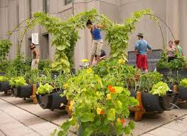 small patio vegetable garden ideas find this pin and more on my