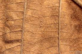 dry leaf texture background image