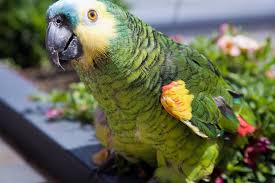 Interesting Facts About Flags Interesting Facts About Sun Conures