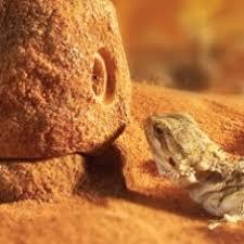 buy vivarium terrarium decoration reptile centre