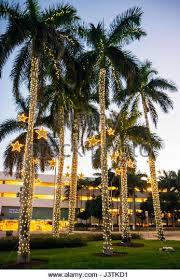miami trees with christmas lights stock photos u0026 miami trees with
