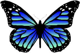 jeff tracey s butterflies