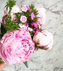 Peonies Season Peonies Everything You Wanted To Know And More