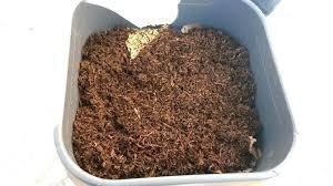 chasser les moucherons dans la cuisine produit contre les moucherons cuisine moucheron cuisine solution