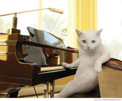 piano related cat pun or cat related piano pun imgur