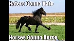Meme Horse - horse memes youtube