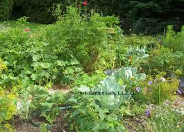 herb gardens start this basic herb garden and enjoy your own herb garden