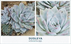 Succulent Plant 20 Popular Types Of Succulents Ftd Com