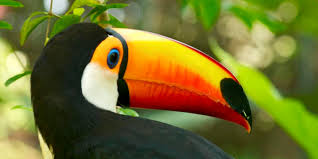 bbc earth the wonderful world of bird beaks