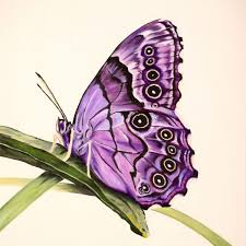 purple butterfly series17 prints and