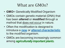 Gmod Identifying Genetically Modified Organisms In Food Ppt