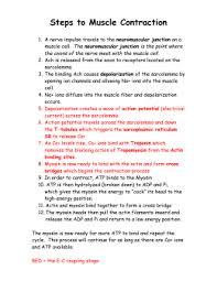 muscles worksheet 19