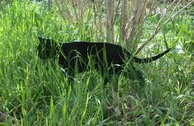 prowling garden cat metal cat ornament garden sculpture
