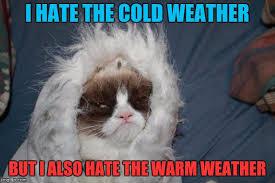 Make Your Own Grumpy Cat Meme - cold grumpy cat meme generator imgflip