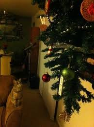 how to make a cat proof christmas tree christmas tree cat and kitty