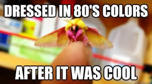 Moth Meme - dressed in 80 s colors after it was cool non hipster moth