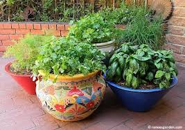 30 best container gardens from seed images on pinterest garden