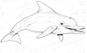 winter the dolphin coloring pages happy for coloring