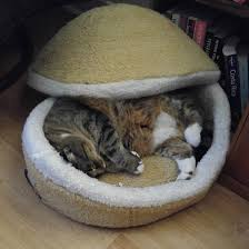 cat in her hamburger bed justviral net