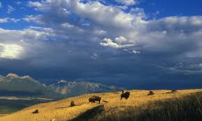 Bison Connect Department Of Interior Secretary Zinke Announces Bison Range Decision National Wildlife