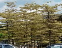 unique trees limited banjara plant nurseries in
