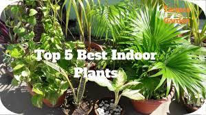 top 5 best indoor plants easy to care and grow indoor plants