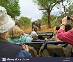 african jeep game drive adventure south africa jeep vehicle people safari car