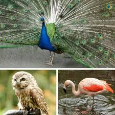 april sprinkles weekend adventures woodland park zoo in seattle